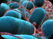 e-coli-wasser-zahnarztpraxis